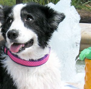 Sunrise Polka Dot Pink Martingale Dog Collars