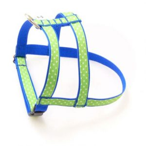 Beach Ball Blue Dog Harness