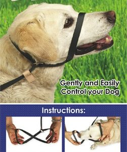 EZ One Piece Halter & Leash