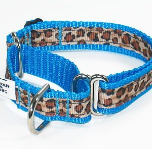 Turquoise Leopard Martingale Collar