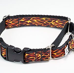 Hot Stuff Buckle Martingale Dog Collar