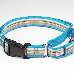 Turquoise Riviera Buckle Martingale Dog Collar