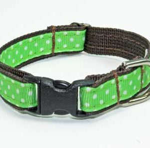 Key Lime Chocolate Dog Collar