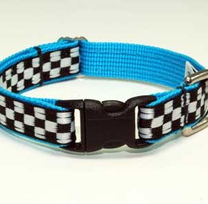 Speedway GT Turquoise Collar