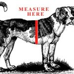 Measure here and for correct sizing on harnessesHow to measure for accurate harness fit